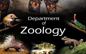 Jobs for Msc Zoology